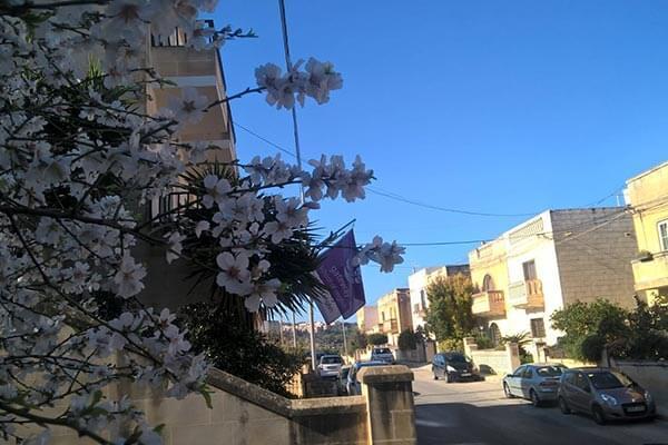 Malta kurs angielskiego dla dorosłych w St. Julian's - informacje o kursie